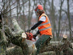 tree-being-cut-up-that-fell-down.jpg
