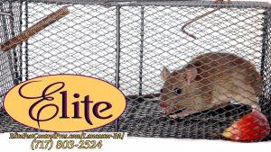 Elite PestControl Lancaster Thumbs-02.jpg