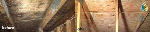 mold-removal-Water-Mold-Fire-Restoration.jpg