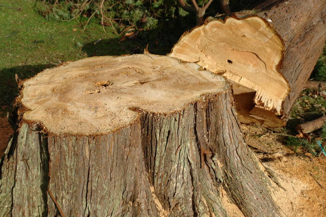 stump-grinding-rosemont_orig.jpg