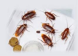 Pest Control 1 - Copy.jpg