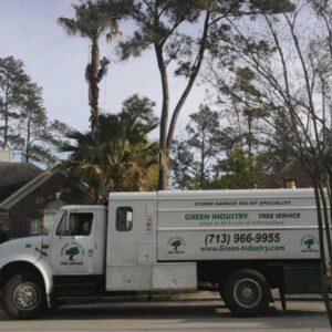 Tree_Service_Cypress_Texas_1.jpg