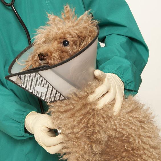 VeterinaryHospitals3.jpg