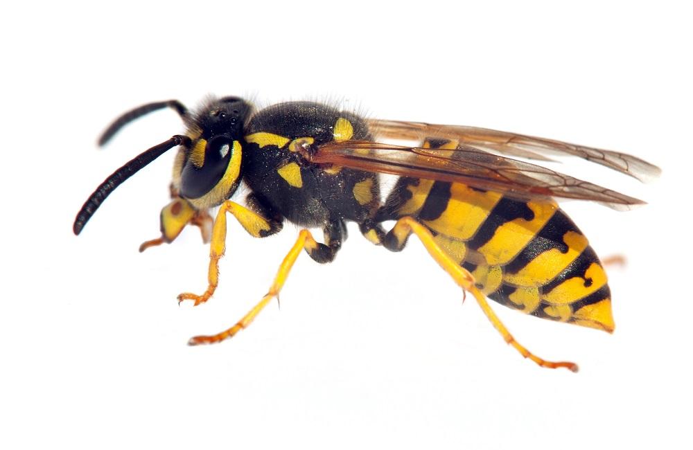 Wasp control Bixby OK.jpg