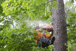 Windsor Tree Removal