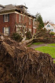Bronx stump removal